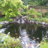 Fish Pond With Waterfall